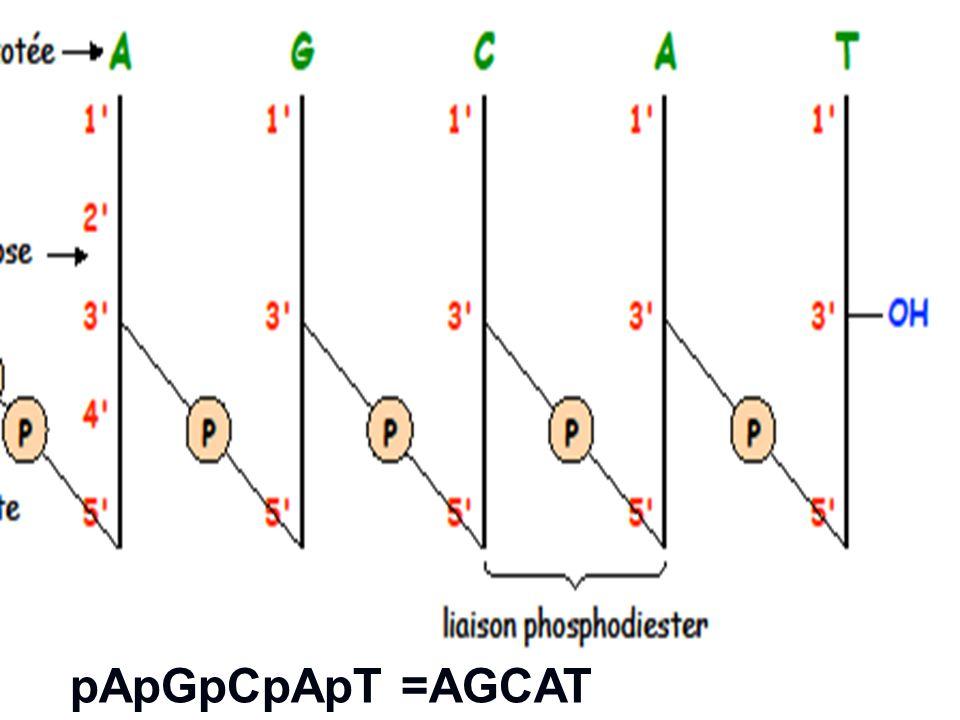 pApGpCpApT =AGCAT