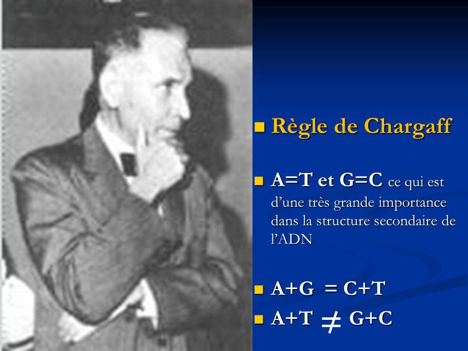 Règle de Chargaff A=T et G=C ce qui est d'une très grande importance dans la structure secondaire de l'ADN.