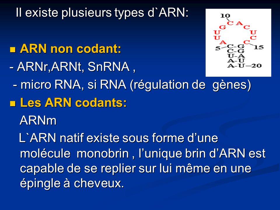 Il existe plusieurs types d`ARN: