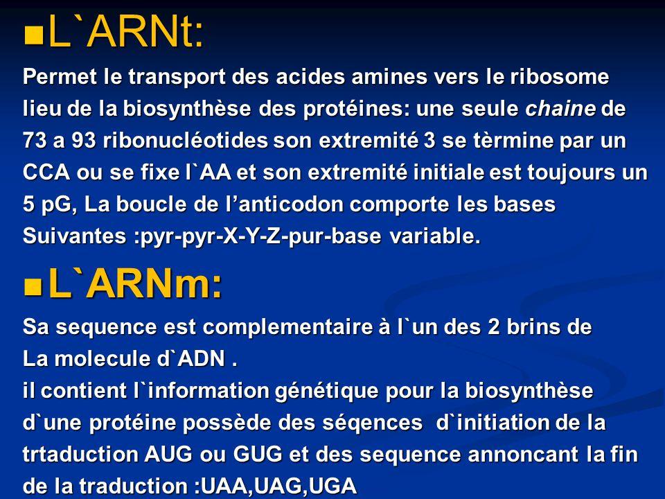 L`ARNt: L`ARNm: Permet le transport des acides amines vers le ribosome