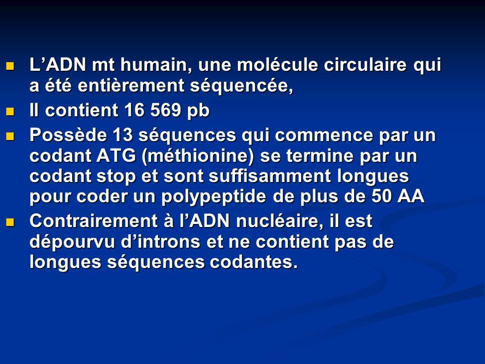 L'ADN mt humain, une molécule circulaire qui a été entièrement séquencée,