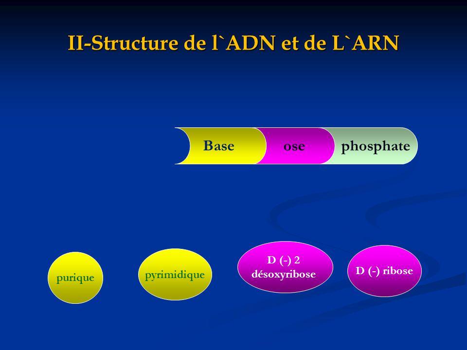II-Structure de l`ADN et de L`ARN