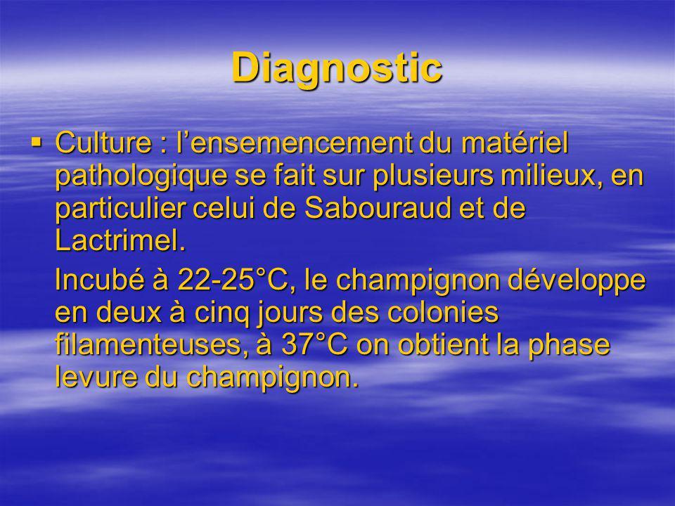 Diagnostic Culture : l'ensemencement du matériel pathologique se fait sur plusieurs milieux, en particulier celui de Sabouraud et de Lactrimel.