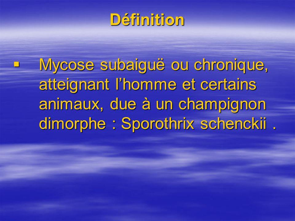 Définition Mycose subaiguë ou chronique, atteignant l'homme et certains animaux, due à un champignon dimorphe : Sporothrix schenckii .