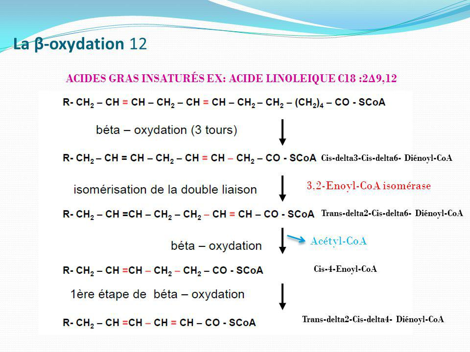 La β-oxydation 12 ACIDES GRAS INSATURÉS EX: ACIDE LINOLEIQUE C18 :2Δ9,12. Cis-delta3-Cis-delta6- Diénoyl-CoA.