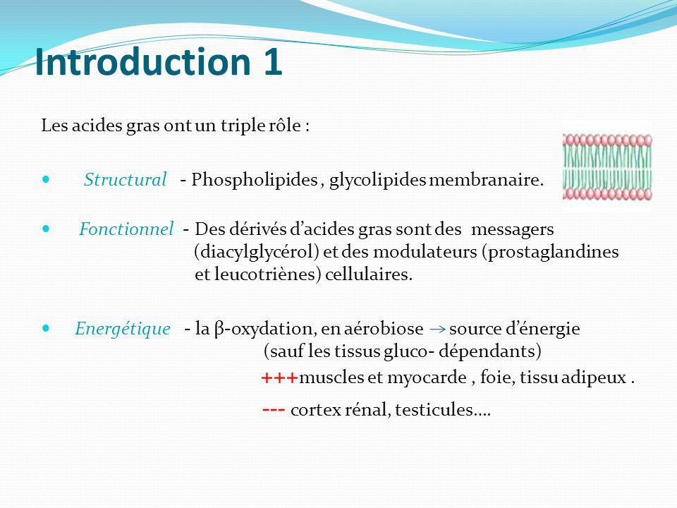 Introduction 1 Les acides gras ont un triple rôle :