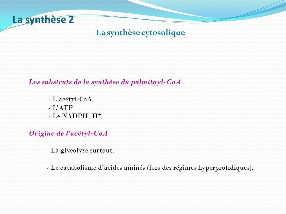 La synthèse 2 La synthèse cytosolique