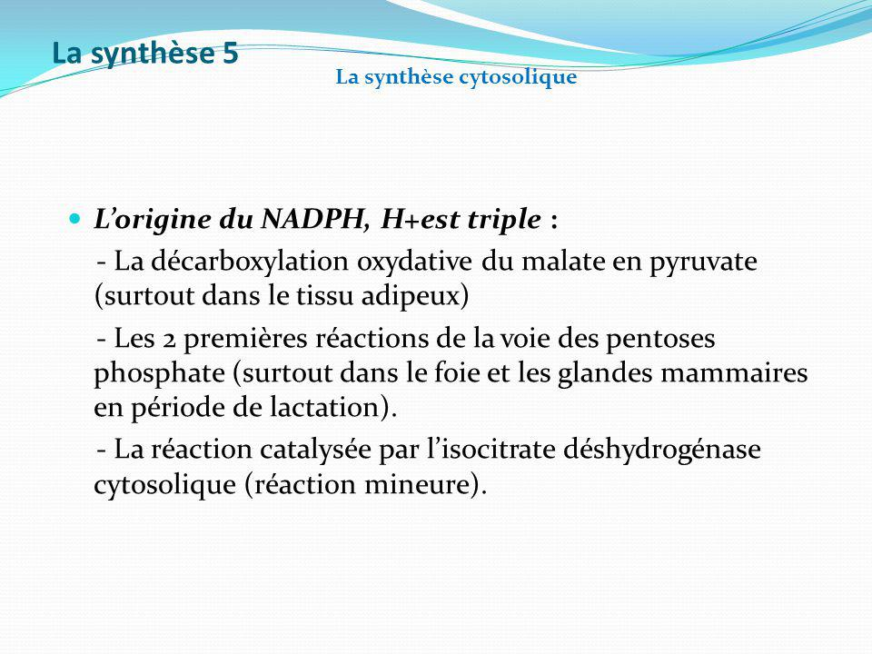 La synthèse 5 L'origine du NADPH, H+est triple :