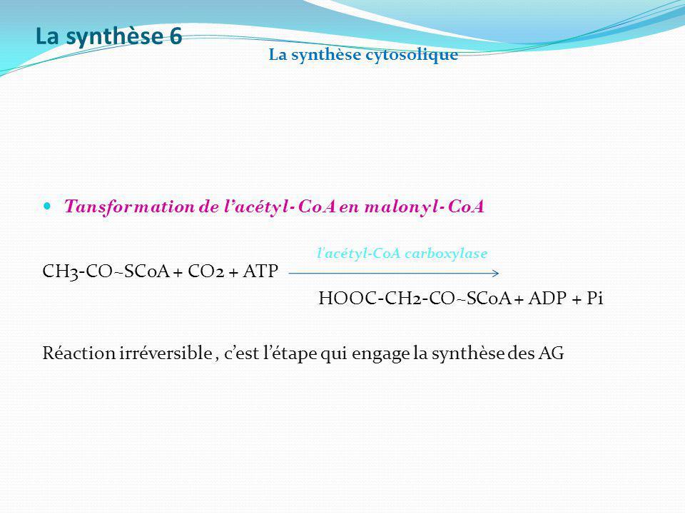 La synthèse 6 Tansformation de l'acétyl-CoA en malonyl-CoA