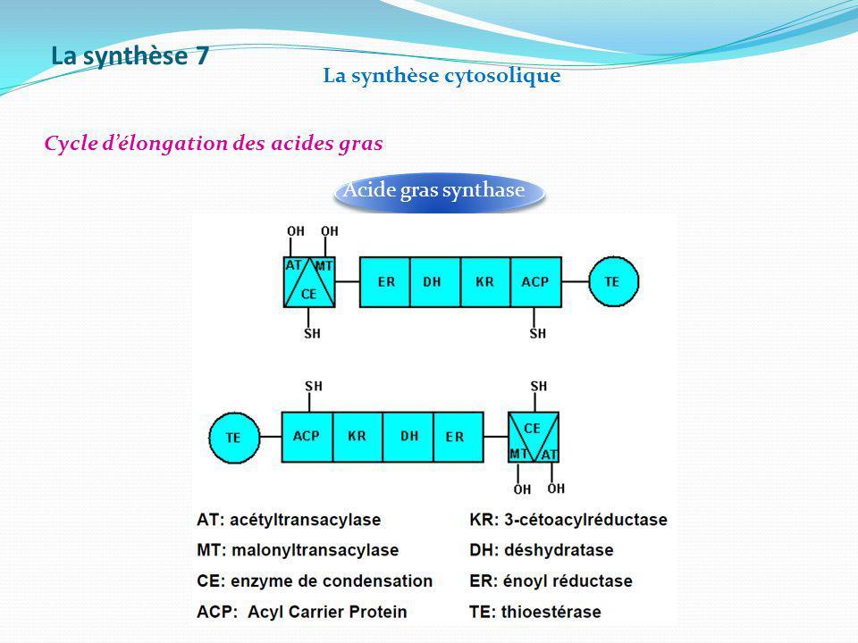 La synthèse 7 La synthèse cytosolique