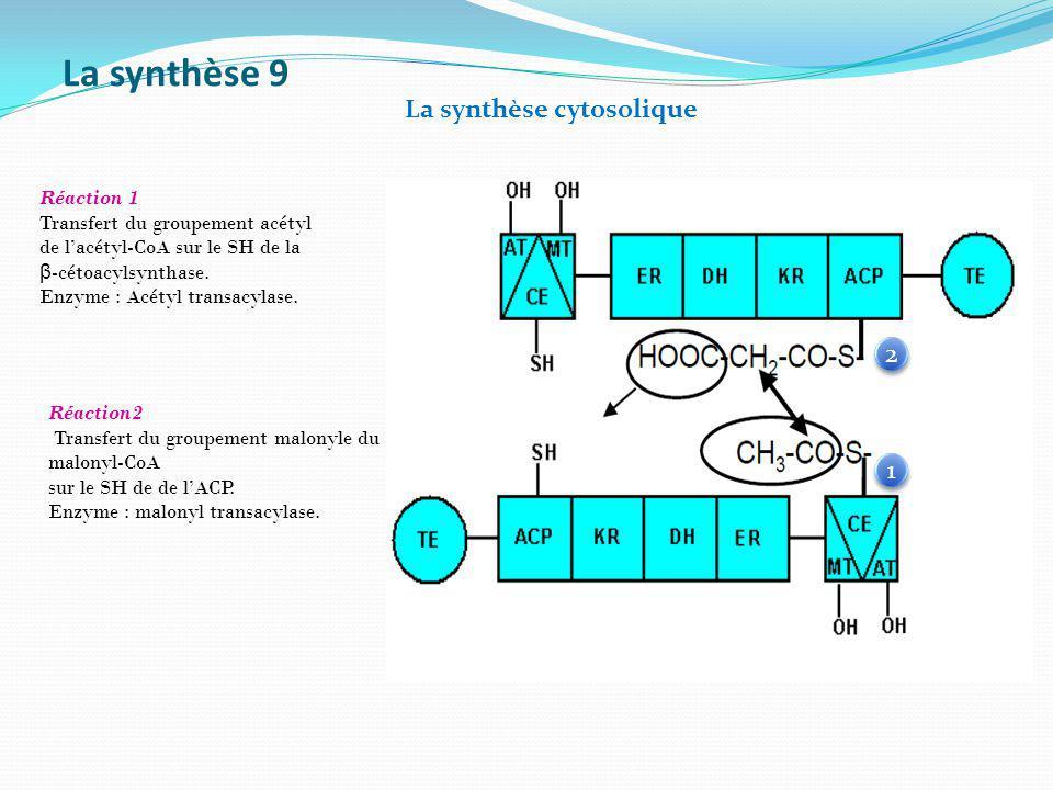 La synthèse 9 La synthèse cytosolique 2 1 Réaction 1