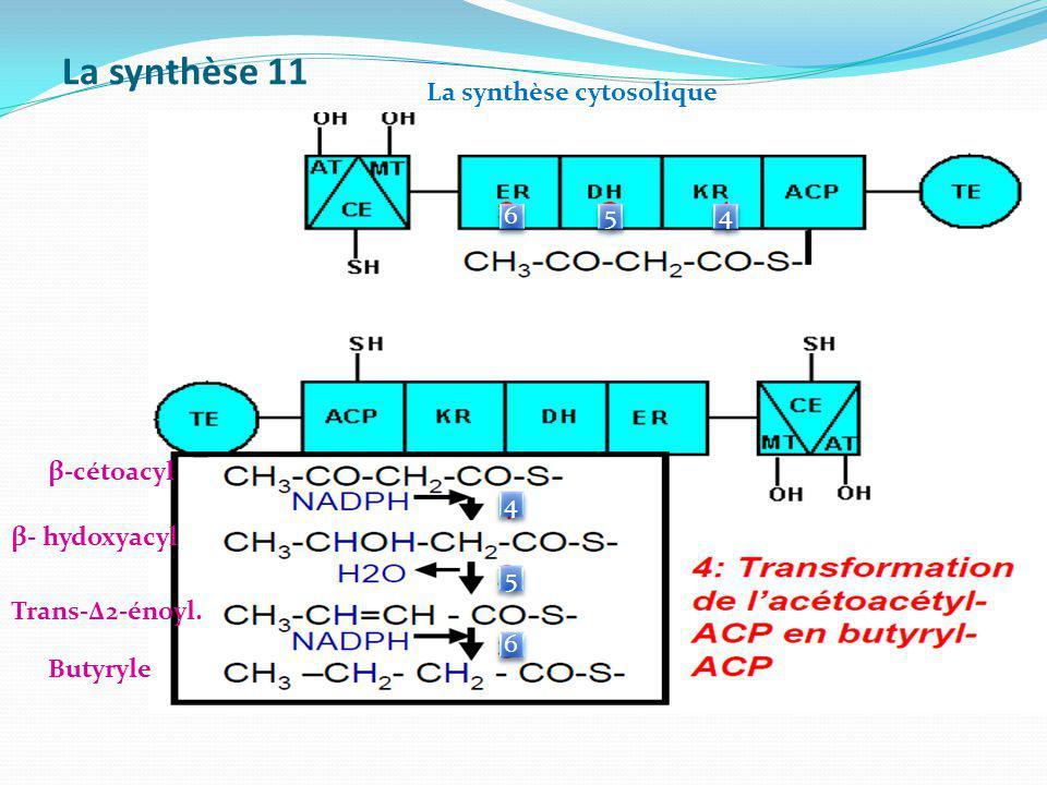 La synthèse 11 La synthèse cytosolique 6 5 4 β-cétoacyl 4