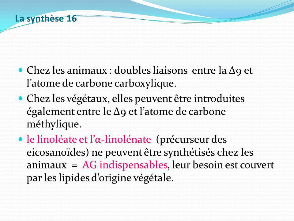 La synthèse 16 Chez les animaux : doubles liaisons entre la Δ9 et l'atome de carbone carboxylique.