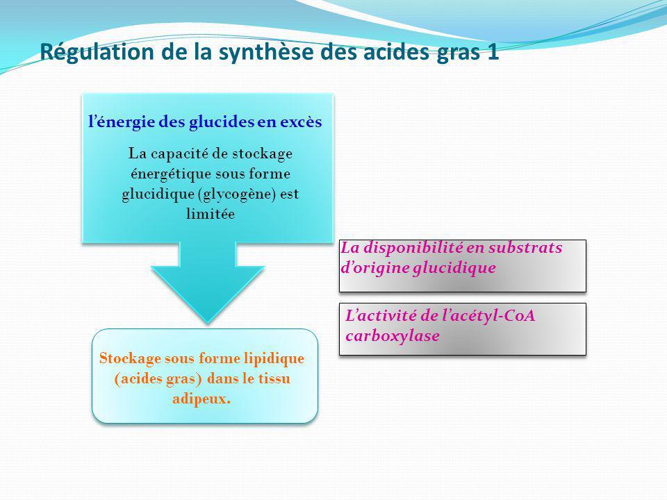 Régulation de la synthèse des acides gras 1