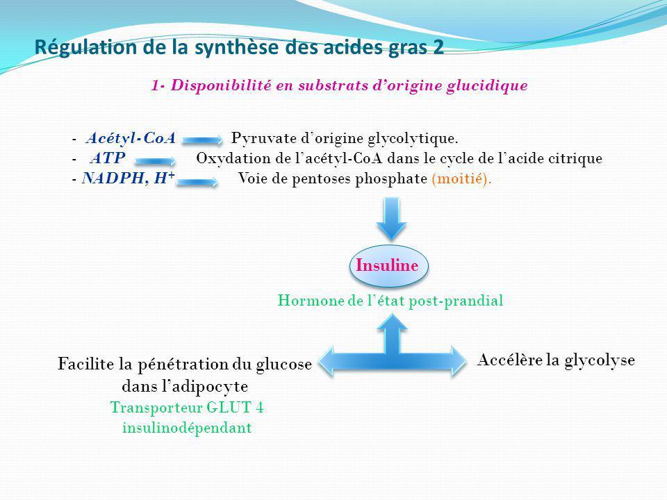Régulation de la synthèse des acides gras 2