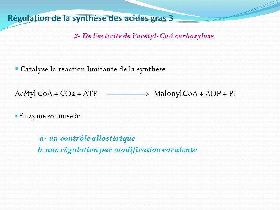 Régulation de la synthèse des acides gras 3