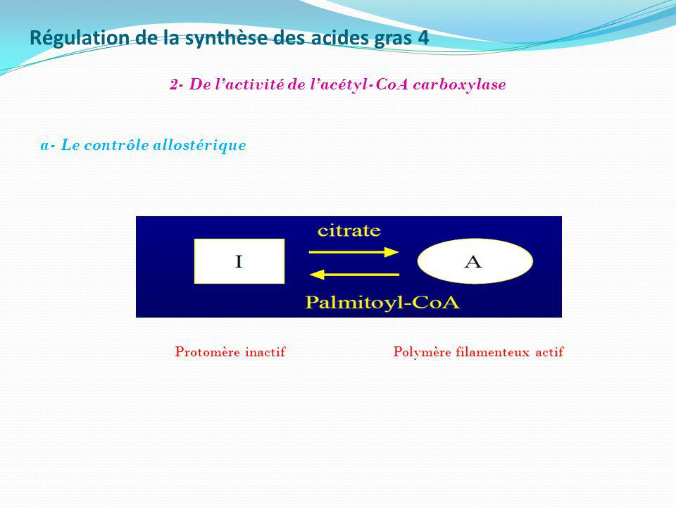 Régulation de la synthèse des acides gras 4