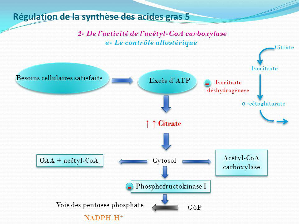 Régulation de la synthèse des acides gras 5