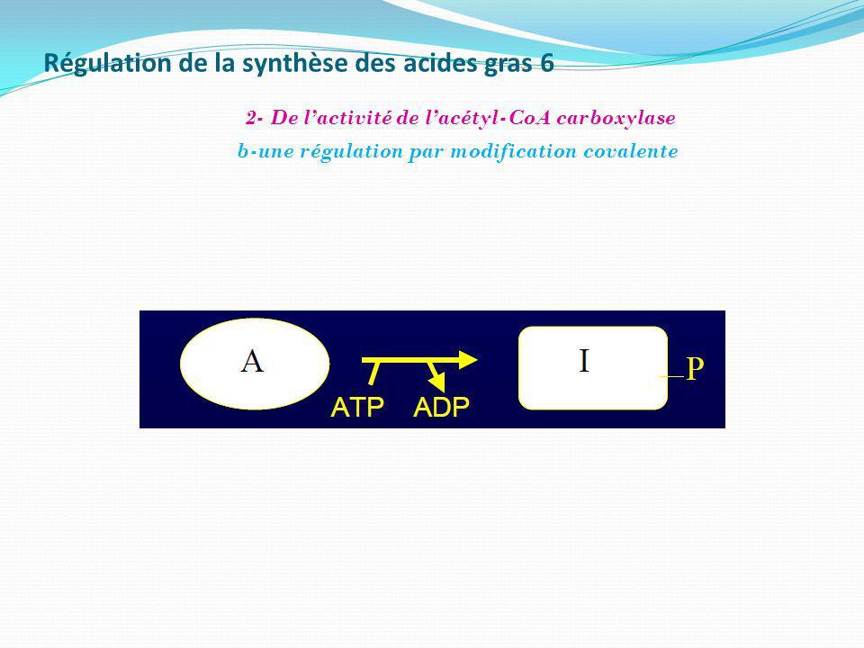 Régulation de la synthèse des acides gras 6