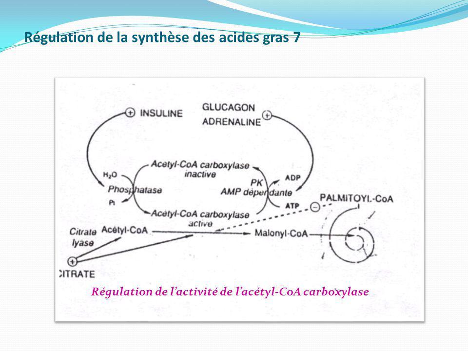 Régulation de la synthèse des acides gras 7