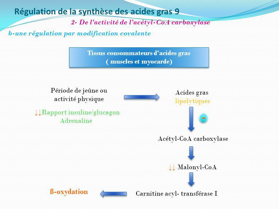 Régulation de la synthèse des acides gras 9