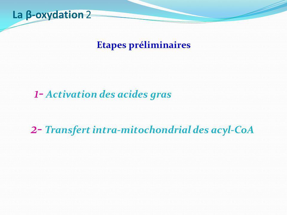 La β-oxydation 2 Etapes préliminaires.