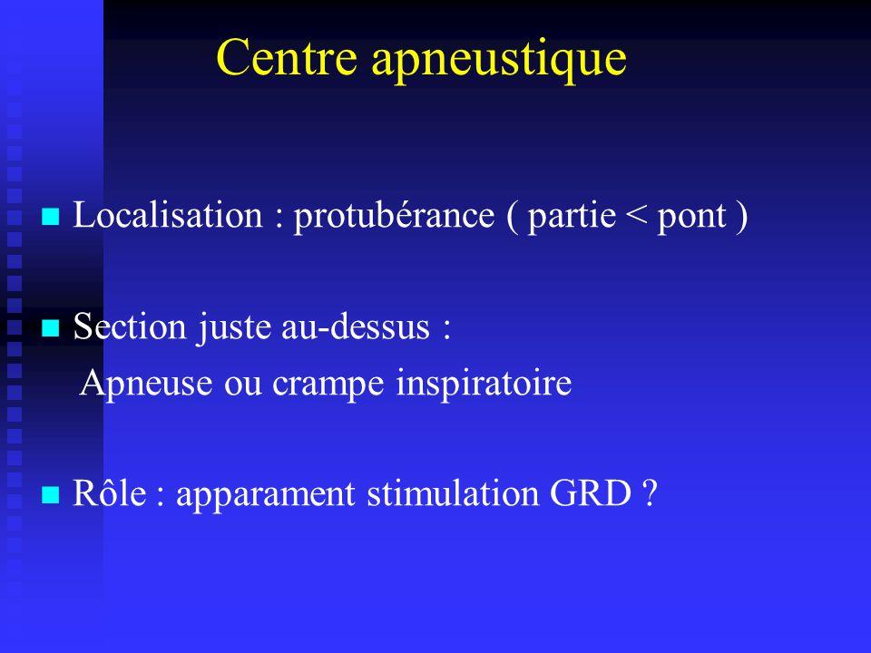 Centre apneustique Localisation : protubérance ( partie < pont )