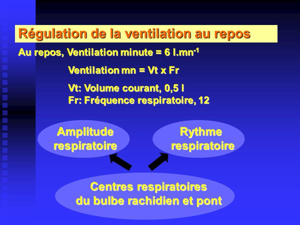 Centres respiratoires du bulbe rachidien et pont