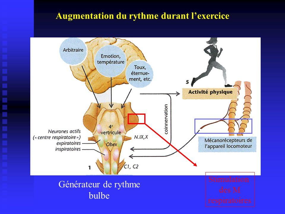 Augmentation du rythme durant l'exercice