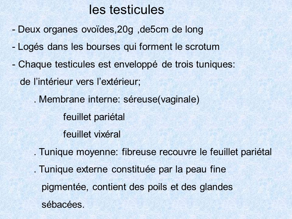 Histologie de l appareil g nital masculin ppt video for Interieur vagin