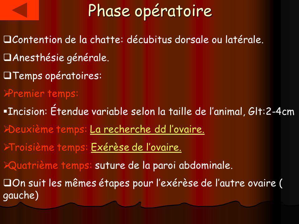 Phase opératoire Contention de la chatte: décubitus dorsale ou latérale. Anesthésie générale. Temps opératoires: