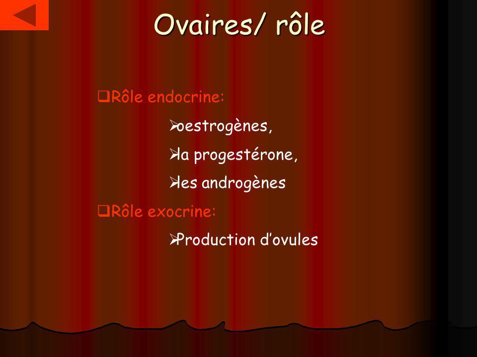 Ovaires/ rôle Rôle endocrine: oestrogènes, la progestérone,