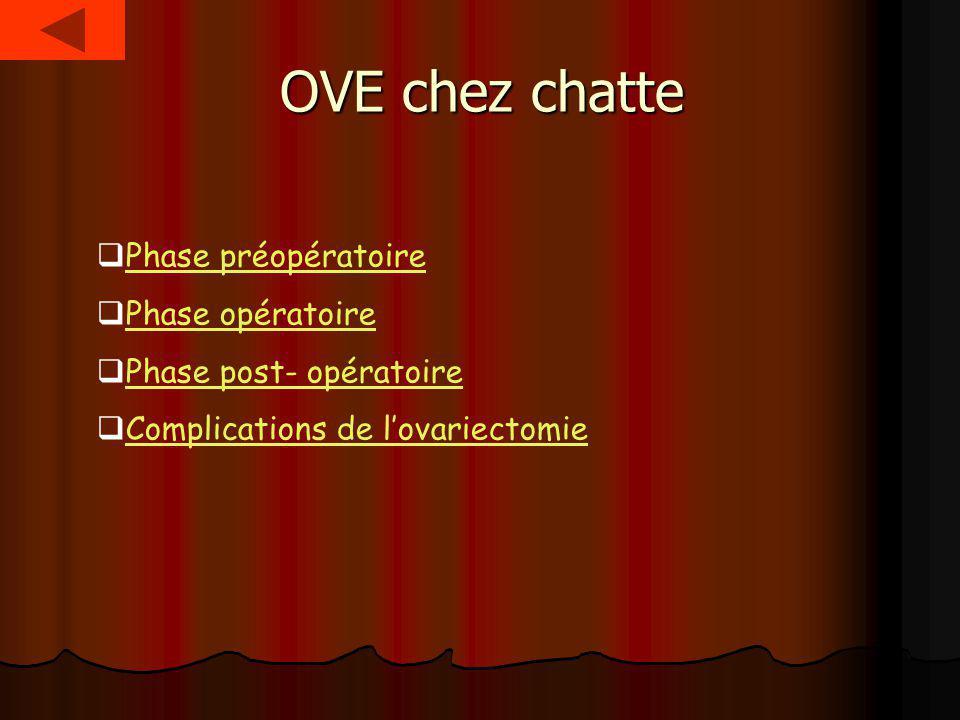 OVE chez chatte Phase préopératoire Phase opératoire