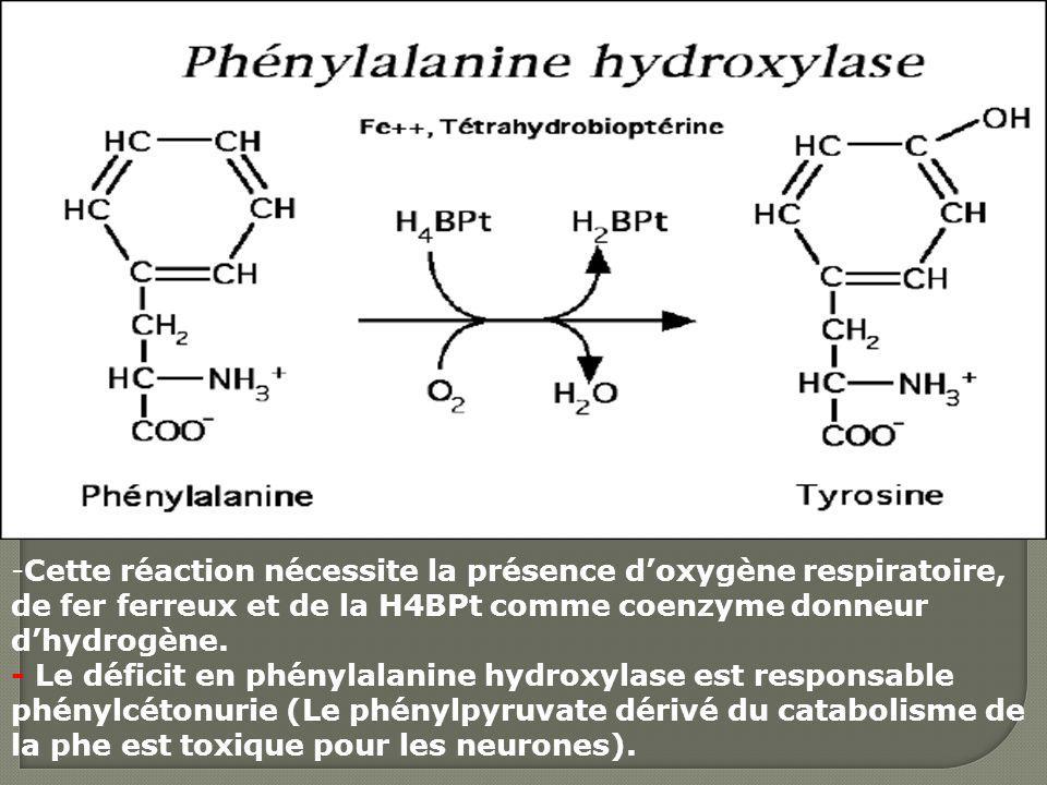 Cette réaction nécessite la présence d'oxygène respiratoire, de fer ferreux et de la H4BPt comme coenzyme donneur d'hydrogène.
