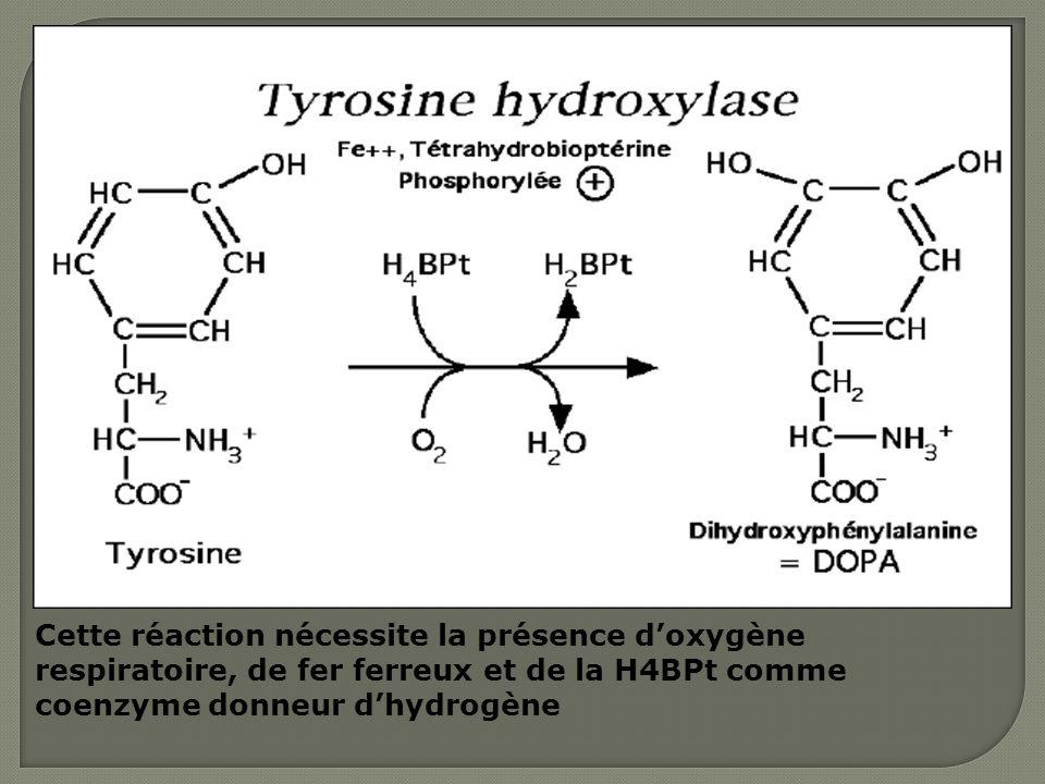 Cette réaction nécessite la présence d'oxygène respiratoire, de fer ferreux et de la H4BPt comme coenzyme donneur d'hydrogène