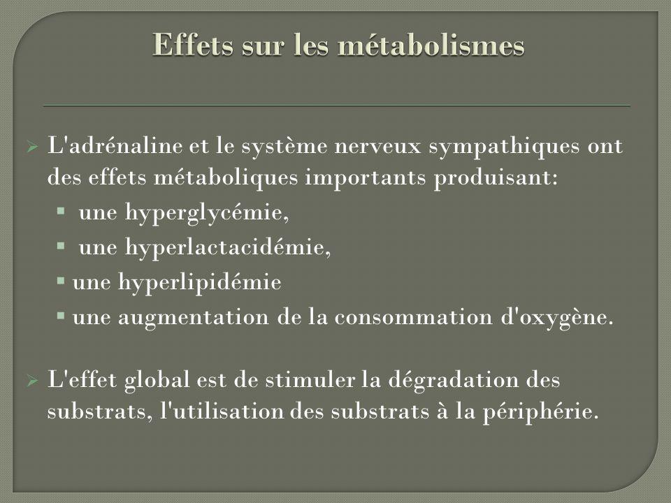 Effets sur les métabolismes