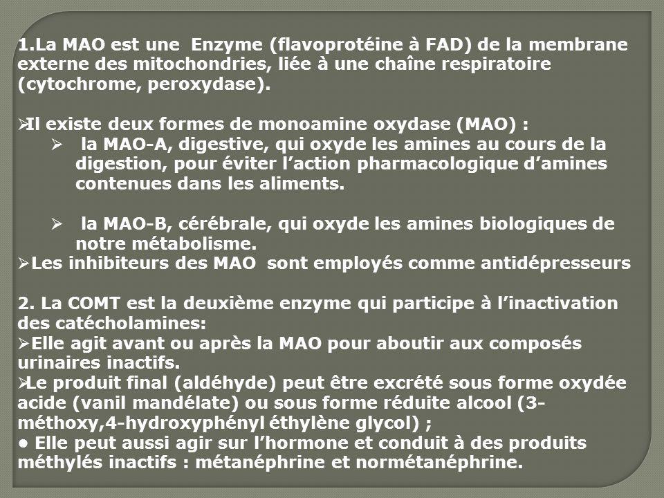 La MAO est une Enzyme (flavoprotéine à FAD) de la membrane externe des mitochondries, liée à une chaîne respiratoire (cytochrome, peroxydase).