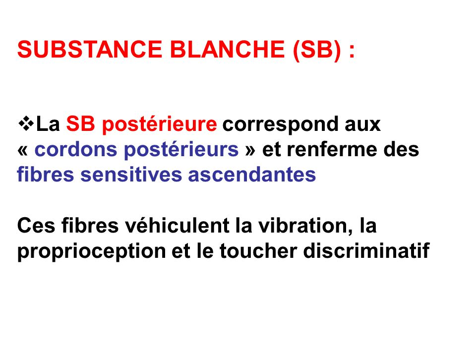 SUBSTANCE BLANCHE (SB) :