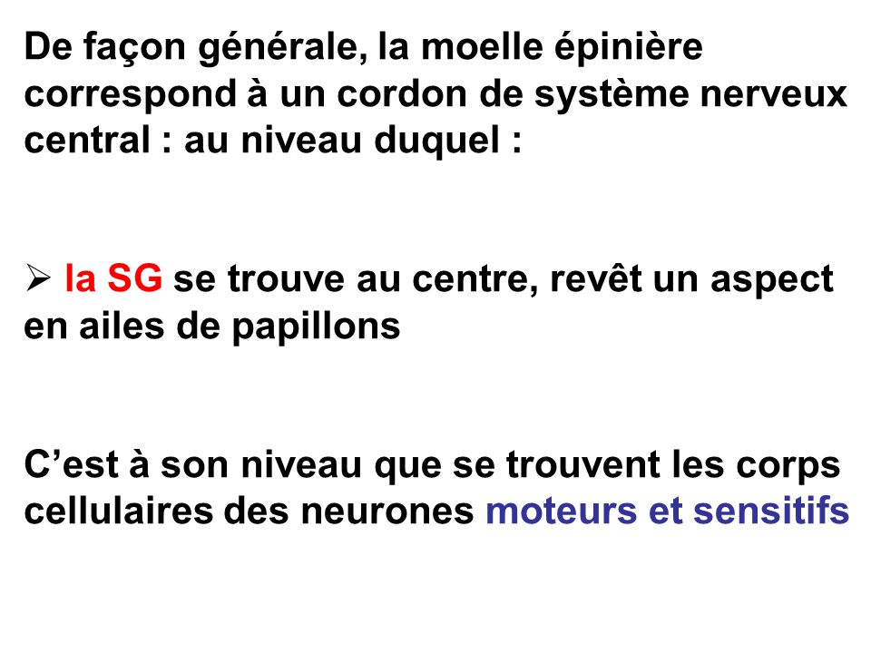 De façon générale, la moelle épinière correspond à un cordon de système nerveux central : au niveau duquel :