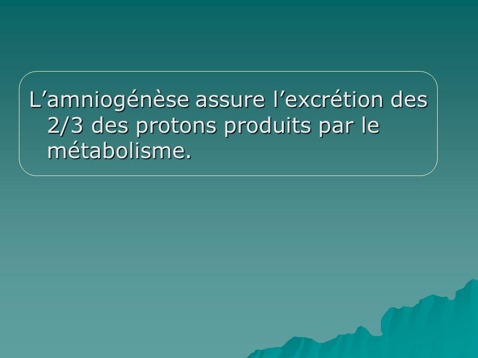 L'amniogénèse assure l'excrétion des 2/3 des protons produits par le métabolisme.