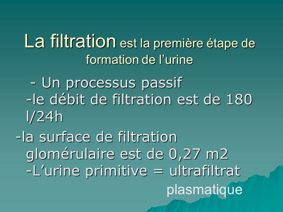 La filtration est la première étape de formation de l'urine