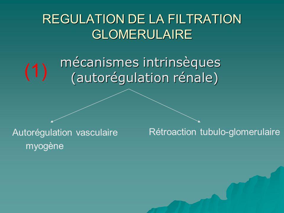 REGULATION DE LA FILTRATION GLOMERULAIRE