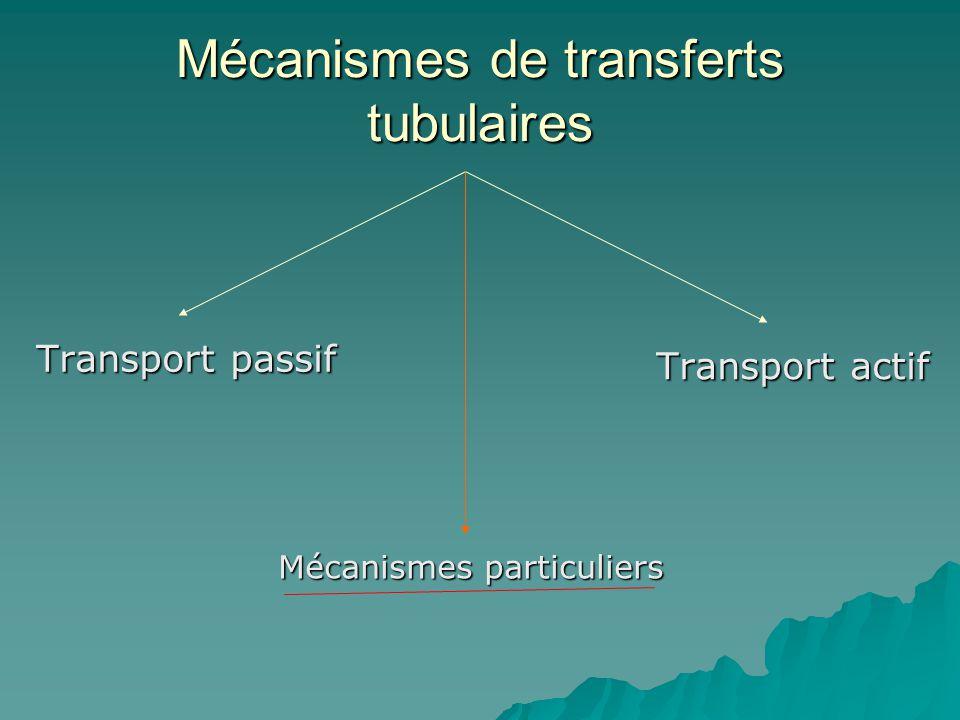 Mécanismes de transferts tubulaires