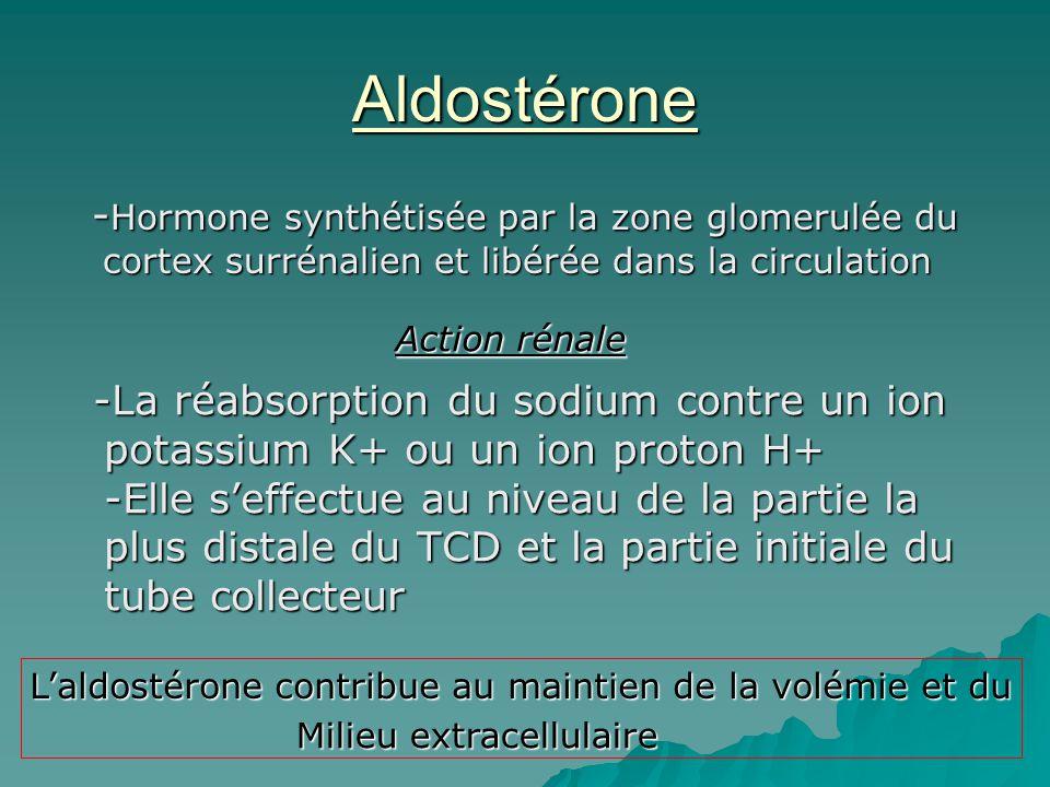 Aldostérone -Hormone synthétisée par la zone glomerulée du cortex surrénalien et libérée dans la circulation.