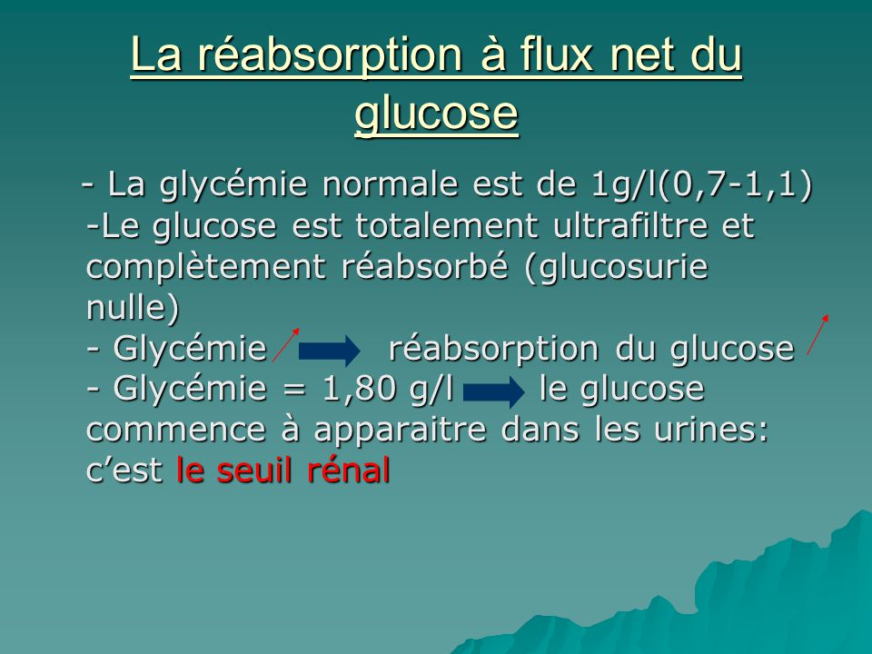 La réabsorption à flux net du glucose
