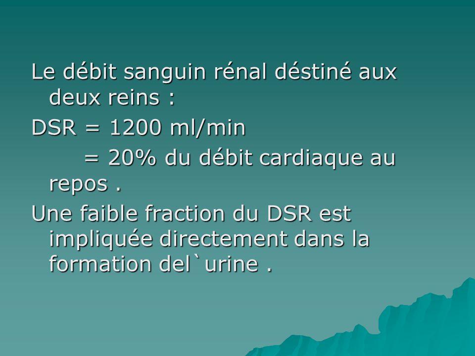 Le débit sanguin rénal déstiné aux deux reins : DSR = 1200 ml/min = 20% du débit cardiaque au repos .