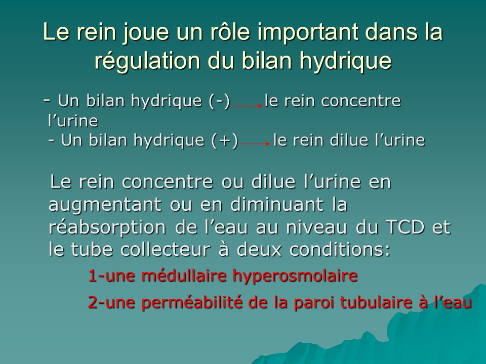 Le rein joue un rôle important dans la régulation du bilan hydrique