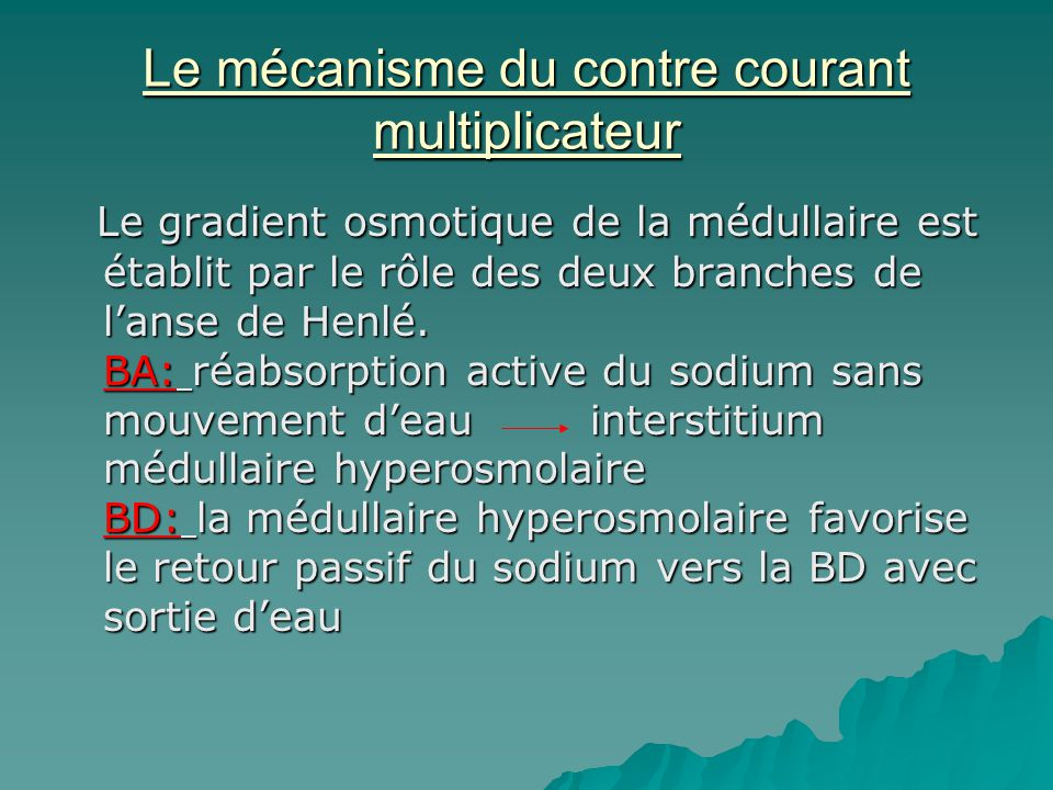 Le mécanisme du contre courant multiplicateur