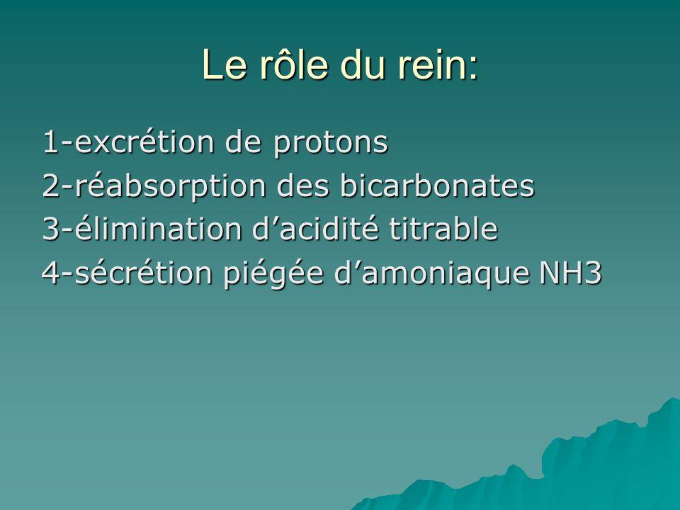 Le rôle du rein: 1-excrétion de protons 2-réabsorption des bicarbonates 3-élimination d'acidité titrable 4-sécrétion piégée d'amoniaque NH3