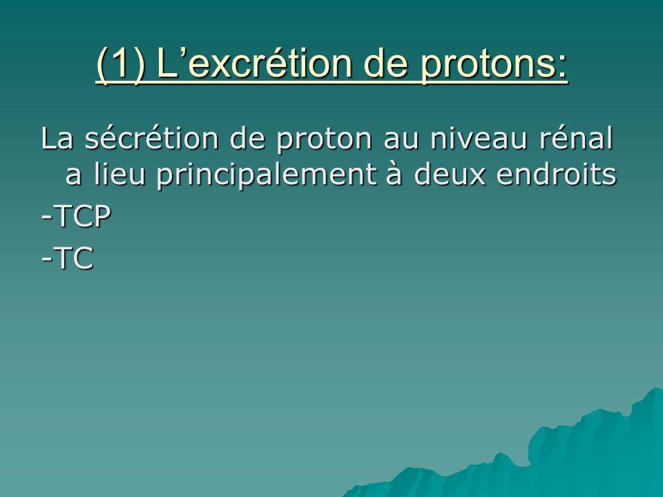 (1) L'excrétion de protons: